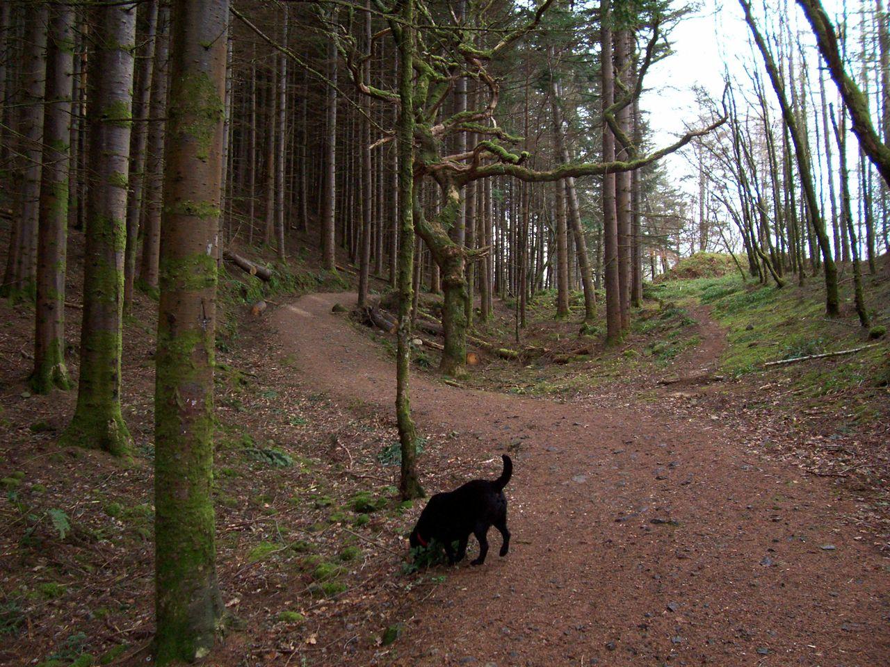 Forrest Walks - Benderloch - Oban